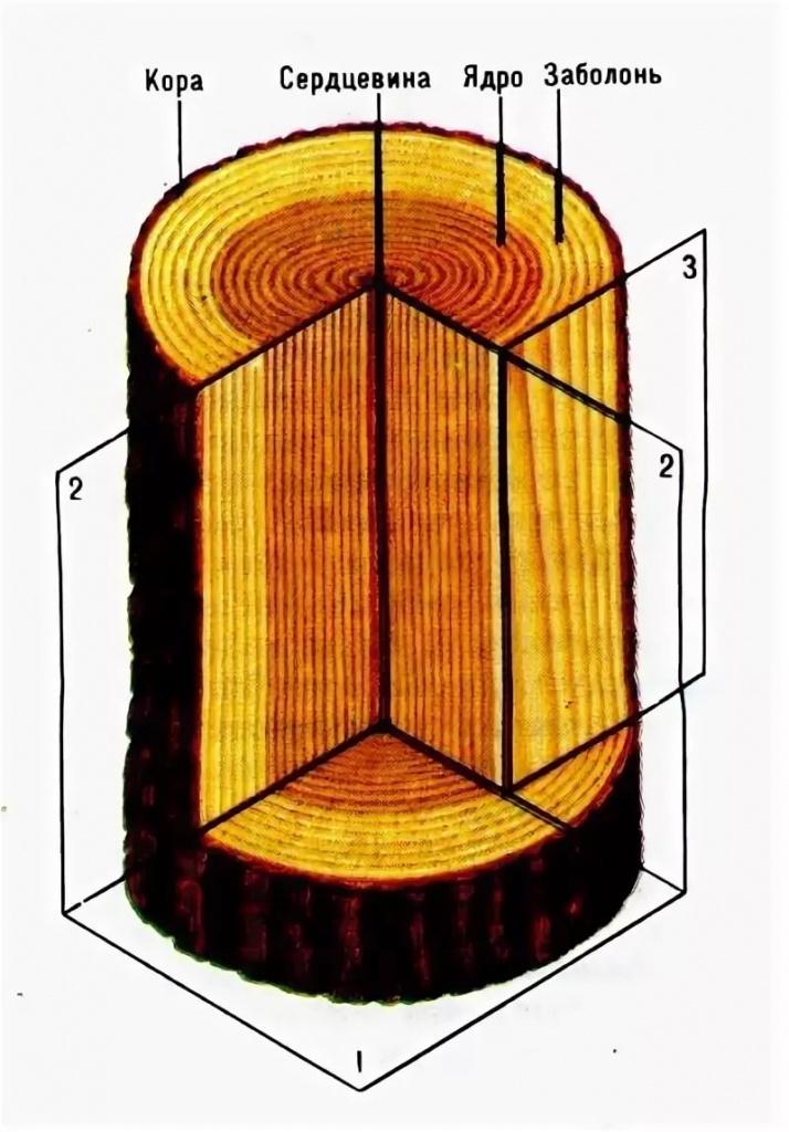Схема структуры древесины